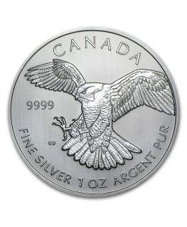 Birds of Prey Series - Silver Peregrine Falcon
